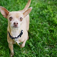 Adopt A Pet :: Capistrano - Salt Lake City, UT