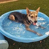 Adopt A Pet :: STELLA - San Diego, CA