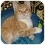 Photo 1 - Domestic Shorthair Kitten for adoption in Little Falls, New Jersey - Obie