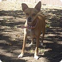 Adopt A Pet :: Simz - West Hills, CA