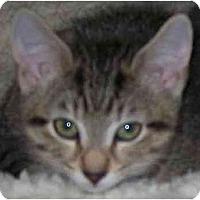 Adopt A Pet :: Manderine - Annapolis, MD