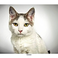 Adopt A Pet :: Reginald - New York, NY