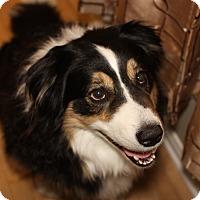 Adopt A Pet :: Watson - Rigaud, QC