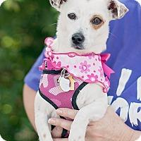 Adopt A Pet :: Dot - Kingwood, TX