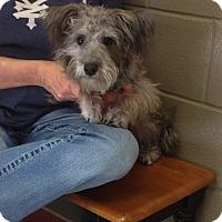 Adopt A Pet :: Harley - Hazard, KY