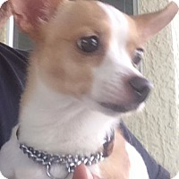Adopt A Pet :: Trudy - Sacramento, CA
