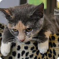Adopt A Pet :: Hannah - Montgomery, TX