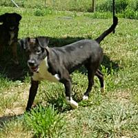 Adopt A Pet :: Oscar - London, KY