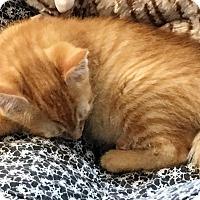 Adopt A Pet :: Maizy - Prescott, AZ