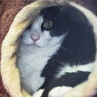Adopt A Pet :: Chonchy - Cedar Rapids, IA