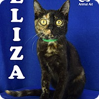 Adopt A Pet :: Eliza - Carencro, LA