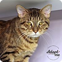 Adopt A Pet :: Jake - Lyons, NY