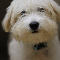 Adopt A Pet :: Bran - Knoxville, TN
