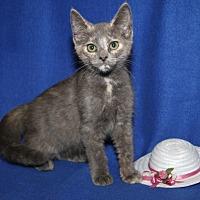 Adopt A Pet :: Gabriella - Marietta, OH