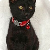 Adopt A Pet :: Wiley - Green Bay, WI