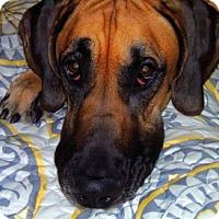 Adopt A Pet :: Jacob - York, PA