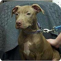 Adopt A Pet :: Bentley - Palmyra, WI