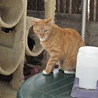 Adopt A Pet :: Monk Monk-for sponsonship - Sherman Oaks, CA