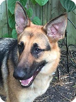 German Shepherd Dog Mix Dog for adoption in Houston, Texas - Ryker