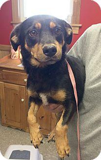 Dachshund/Beagle Mix Dog for adoption in Hot Springs, Virginia - Oscar
