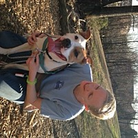 Pit Bull Terrier Dog for adoption in Richmond, Virginia - Marco in Charlottesville, VA