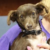Adopt A Pet :: Sheena - Fresno, CA