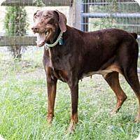 Adopt A Pet :: MARTA - Greensboro, NC