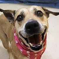 Adopt A Pet :: SNACKS - Little Rock, AR