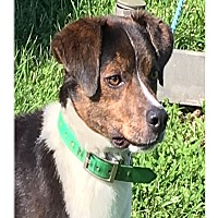 Adopt A Pet :: ALEX - LaGrange, KY