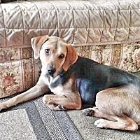 Adopt A Pet :: Erin - Wappingers, NY