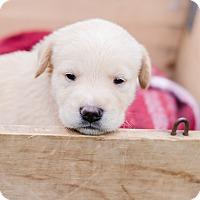 Adopt A Pet :: Midge $250 - Seneca, SC