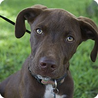 Adopt A Pet :: Oliver - Berkeley Heights, NJ