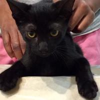 Adopt A Pet :: SALI - St. Thomas, VI