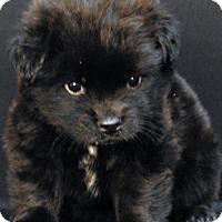 Adopt A Pet :: Otter - Newland, NC