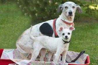 Terrier (Unknown Type, Small) Mix Dog for adoption in Davenport, Iowa - Diamond
