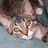 Adopt A Pet :: Tansy - Evans, CO