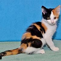 Adopt A Pet :: Lilith - Lenexa, KS