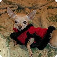 Adopt A Pet :: Mimi the magnificent - Poulsob, WA