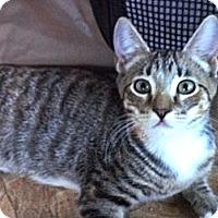 Adopt A Pet :: Chloe - Escondido, CA