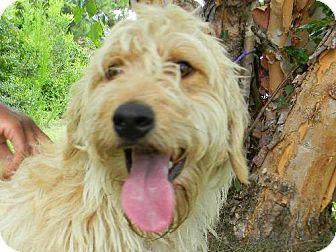 Terrier (Unknown Type, Medium)/Golden Retriever Mix Dog for adoption in Tyner, North Carolina - Lucky