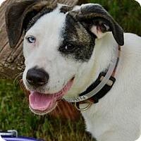 Adopt A Pet :: Jolie - Athens, GA