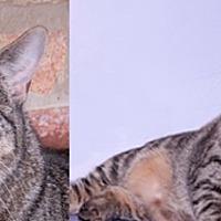 Adopt A Pet :: Katrina - Chicago, IL