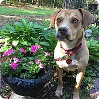 Adopt A Pet :: Reggie - Macon, GA