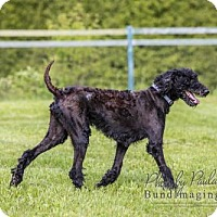 Adopt A Pet :: Angus - Courtice, ON