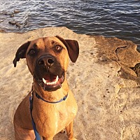 Adopt A Pet :: Lando - Goodlettsville, TN