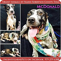 Adopt A Pet :: McDonald - Hearne, TX