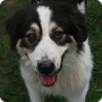 Adopt A Pet :: Lily - Attalla, AL