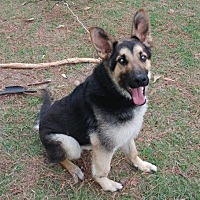 Adopt A Pet :: Sammy - Montgomery, AL
