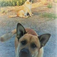 Adopt A Pet :: Cookie & Roger - Snohomish, WA