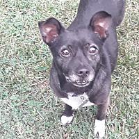 Adopt A Pet :: Kie - Flossmoor, IL